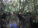 Jones Creek Jax Arboretum 2