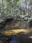 Jones Creek Jax Arboretum 3