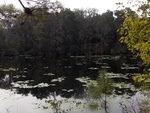 Lake Ray Jax Arboretum 1