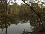 Lake Ray Jax Arboretum 2