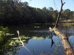 Lake Ray Jax Arboretum 3
