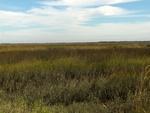Round Marsh 1
