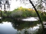 Suwannee River 2