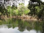 Suwannee River 5