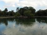 Riverside Park, Duck Pond 2, Jacksonville, FL