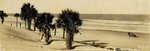 Photograph: Panoramic photo captioned Palms at Jax, Jacksonville Beach, Florida; 1925