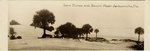 Photograph: Panoramic Photo captioned Sand Dunes and Beach, Jacksonville Beach, Florida; 1925
