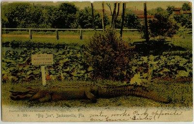 Postcard: Big Joe Alligator, Jacksonville, Florida