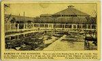 "Postcard: ""Basking in the Sunshine"" Alligator Farm Jacksonville, Florida"