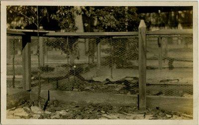 Postcard: Alligator pens at the Alligator Farm Jacksonville, Florida