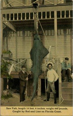 Postcard: Sawfish, Mayport, Florida