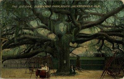 Postcard: The Big Oak, Dixieland Park, South Jacksonville, Florida
