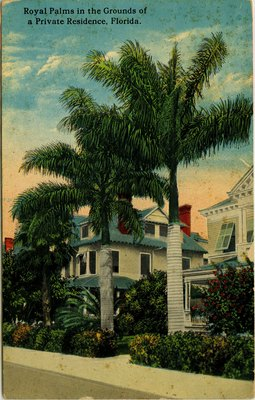 Postcard: Royal Palms in the Grounds of a Private Residence, Florida