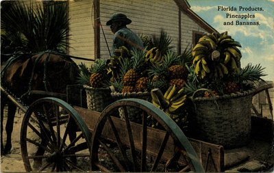Postcard: Florida Products, Pineapples and Bananas, Jacksonville, Florida