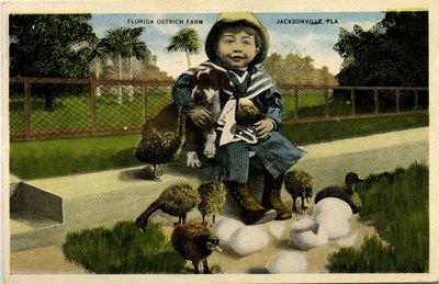 Postcard: Florida Ostrich Farm, Jacksonville, Florida