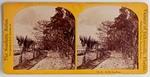 Stereograph Card: No. 8 At the Landing, The Southern Series, Vcinity of Jacksonville, Florida; 1870-1890