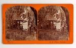 Stereograph Card: Mossy Grove, Arlington, Florida Views, Gem Series; 1880-1900's