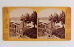 Stereograph Card: A Study, Arlington Bluffs, Fla.; 1880-1900's