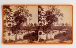 Stereograph Card: Arlington River, Florida; 1880-1900's