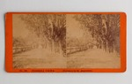 Stereograph Card: Florida Views, Entrance to St. Augustine, Florida; Undated