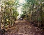 Sawmill Slough Trail
