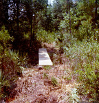 White Violet Trail