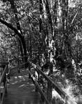 Red Maple Boardwalk, UNF Nature Trail