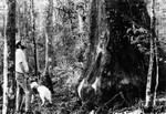 "The ""Big Cypress"""
