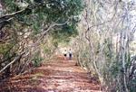 Nature Trails, 1990
