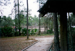 Nature Trail, January 11, 1991