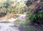 White Violet Trail, 1991