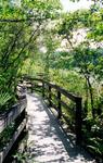 Red Maple Boardwalk, 1999