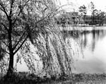 Boathouse Lake, 1976