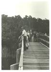 Bridge, Nature Trails
