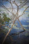 Branches by Felicia Difato