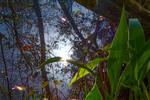 Hidden Spring by Jordan Muhammad