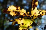 A New Leaf by Jordan Muhammad