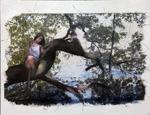 The Reclining Tree on Lake Oneida